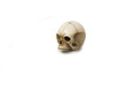 Galerie Tiago Paris Art du Japon Netsuke crâne ivoire Meiji