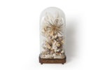 Galerie Tiago Paris Art du Japon Composition coquillages Ludovic Minet